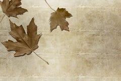 jesień abstrakcjonistyczny tło Zdjęcia Stock