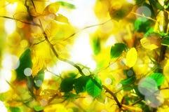 jesień abstrakcjonistyczny tło Zdjęcia Royalty Free