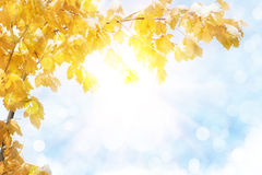 jesień abstrakcjonistyczny tło Obraz Stock