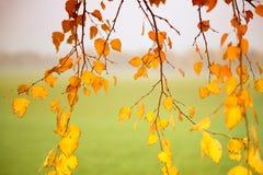 Jesień abstrakcjonistyczny tło Obrazy Stock