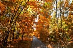Jesień aleja Zdjęcie Royalty Free