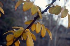 jesień błękit długa natura ocienia niebo Obraz Stock