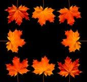 jesień błękit granicy ramy złoto opuszczać niebo Fotografia Royalty Free