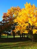 jesień błękitny jeziora nw Oregon park Fotografia Stock