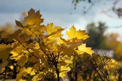 jesień błękitny kolorów zielony klonowy pomarańczowy kolor żółty Obraz Stock