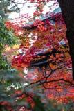 jesień błękitny kolorów zielony klonowy pomarańczowy kolor żółty Fotografia Stock