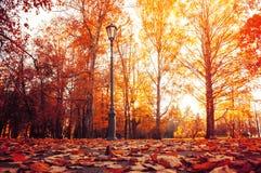 jesień błękitny miasta ulistnienia krajobrazu nieba drzewa yellow Jesieni drzewa w pogodnym jesień parku zaświecali światłem słon obrazy stock