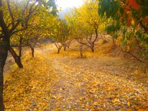 jesień bank colours niemieckiego Rhine rzeki drzewa kolor żółty zdjęcie royalty free