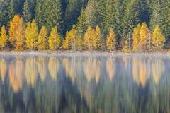 jesień bank colours niemieckiego Rhine rzeki drzewa kolor żółty Fotografia Royalty Free