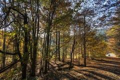 jesień bank colours niemieckiego Rhine rzeki drzewa kolor żółty Zdjęcia Stock