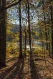 jesień bank colours niemieckiego Rhine rzeki drzewa kolor żółty Zdjęcie Stock