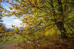 jesień bank colours niemieckiego Rhine rzeki drzewa kolor żółty Obraz Royalty Free