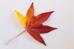 jesień bank colours niemieckiego Rhine rzeki drzewa kolor żółty Obrazy Royalty Free