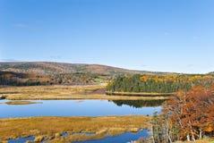 jesień barłóg Zdjęcie Stock