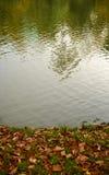 Jesień barwiąca opuszcza niedalekiego jeziornego Teplice Fotografia Stock