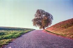 Jesień barwi i osamotniony drzewo w szwajcar wsi z analog fotografią i polach - 3 fotografia stock