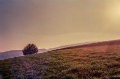 Jesień barwi i osamotniony drzewo w szwajcar wsi z analog fotografią i polach - 2 obraz royalty free
