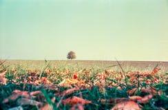 Jesień barwi i osamotniony drzewo w szwajcar wsi z analog fotografią i polach - 4 fotografia stock