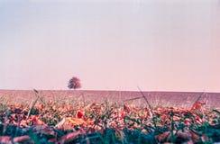 Jesień barwi i osamotniony drzewo w szwajcar wsi z analog fotografią i polach - 6 zdjęcie stock