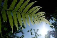 jesień barwi liść deseniuje bezszwową teksturę Zdjęcie Stock