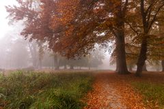Jesień barwi na mglistym ranku, dużych drzewach i ścieżce w lesie w Dani, zdjęcie royalty free