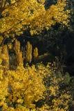 Jesień barwi, Rio Mundo źródło, Naturalny park Los Calares Del rÃo Mundo y De Los angeles Sima, sierra de Alcaraz y del Segura zdjęcie royalty free