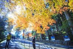 Jesień Barwi w Japonia, Piękni jesień liście Zdjęcie Stock