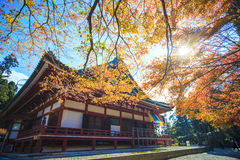 Jesień Barwi w Japonia, Piękni jesień liście Fotografia Royalty Free