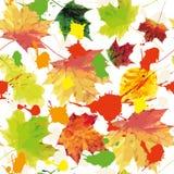 jesień bezszwowa Fotografia Royalty Free