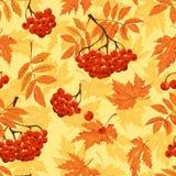 Jesień bezszwowy wzór z liśćmi, ashberry i również zwrócić corel ilustracji wektora Fotografia Royalty Free