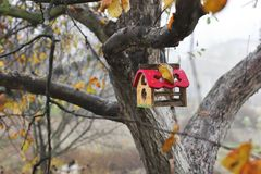 jesień birdhouse opuszczać drzewa gałązek kolor żółty obrazy royalty free