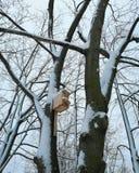 jesień birdhouse opuszczać drzewa gałązek kolor żółty obraz stock