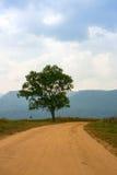 jesień brudnej śródpolnej drogi pojedynczy drzewo Fotografia Royalty Free