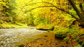 Jesień brzeg rzeki z pomarańczowymi bukowymi liśćmi Świezi zieleni liście na gałąź above - woda robi odbiciu Dżdżysty wieczór zbiory wideo