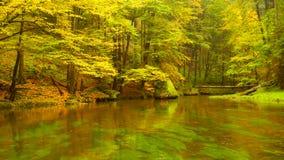 Jesień brzeg rzeki z pomarańczowymi bukowymi liśćmi Świezi zieleni liście na gałąź above - woda robi odbiciu Dżdżysty wieczór zbiory