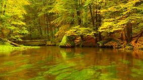 Jesień brzeg rzeki z pomarańczowymi bukowymi liśćmi Świezi zieleni liście na gałąź above - woda robi odbiciu Dżdżysty wieczór zdjęcie wideo