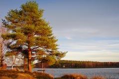 jesień brzegowy wschód słońca drzewa kolor żółty Obraz Stock