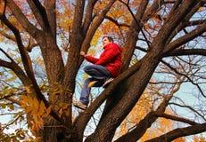 jesień brzoz liść łąkowi pomarańczowi drzewa Obrazy Royalty Free