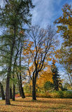 jesień brzoz liść łąkowi pomarańczowi drzewa Zdjęcie Royalty Free