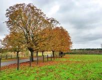 jesień brzoz liść łąkowi pomarańczowi drzewa Obrazy Stock