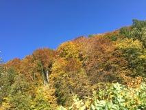 jesień brzoz liść łąkowi pomarańczowi drzewa Obraz Royalty Free