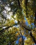 jesień brzoz liść łąkowi pomarańczowi drzewa zdjęcie stock