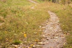 jesień buków fern chmurnego nieba oświetleniowego bardzo miękki toru Zdjęcie Stock