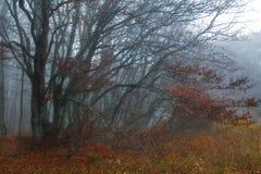 jesień buków liść czerwoni Zdjęcia Royalty Free