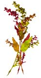 jesień bukiet barwi liść Zdjęcia Stock