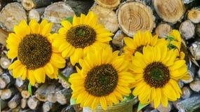 Jesień bukiet słoneczniki z Woodpile Fotografia Royalty Free