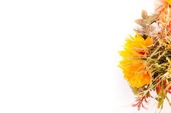 Jesień bukiet Wysuszeni kwiaty i przylądka agrest na bielu Zdjęcie Royalty Free