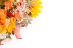 Jesień bukiet Wysuszeni kwiaty i przylądka agrest na bielu Zdjęcia Royalty Free