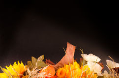 Jesień bukiet Wysuszeni kwiaty i przylądka agrest na czerni Zdjęcia Stock