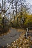 jesień centrali park Środek miasta Manhattan Miasto Nowy Jork zdjęcie stock